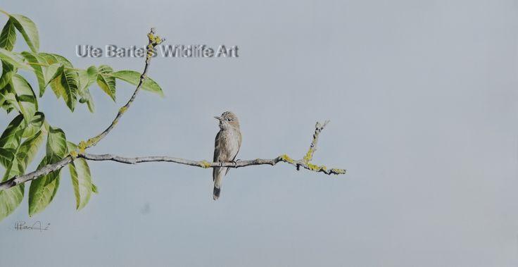 """""""Grauschnäpper"""" (Flycatcher) Silkpainting, 70 x 95 cm"""