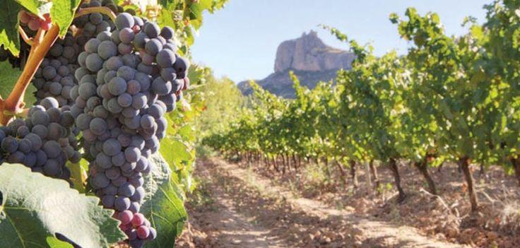 En Yecla el vino es una forma de sentir la vida. Se cuenta que hace cuatro mil años los fenicios ya lo producían en estas tierras. Por eso la Ruta del Vino es una de las mejores formas de descubrir esta ciudad murciana, de conocer su historia y sus gentes.