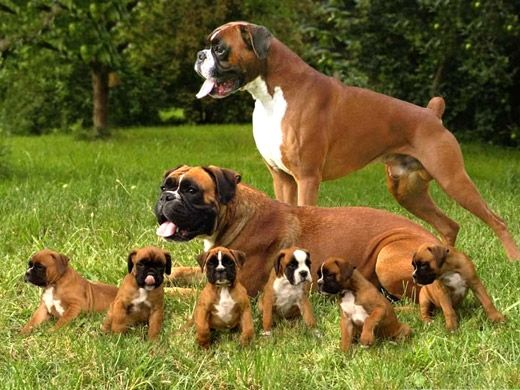 BIOGRAFIAS E COISAS .COM: cão parte 02(cachorro)                                                                                                                                                                                 Mais