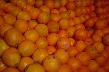 Cara Cara Navel Orange Tree: Cara Orange, Cooking Stuff, Cara Navel, Regular Navel, Fruit Trees, Orange Trees, Frutas Saludables, Reddish Flesh, Navel Orange