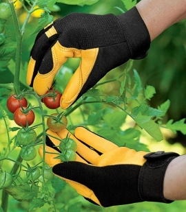 Gardening gloves fit for royalty