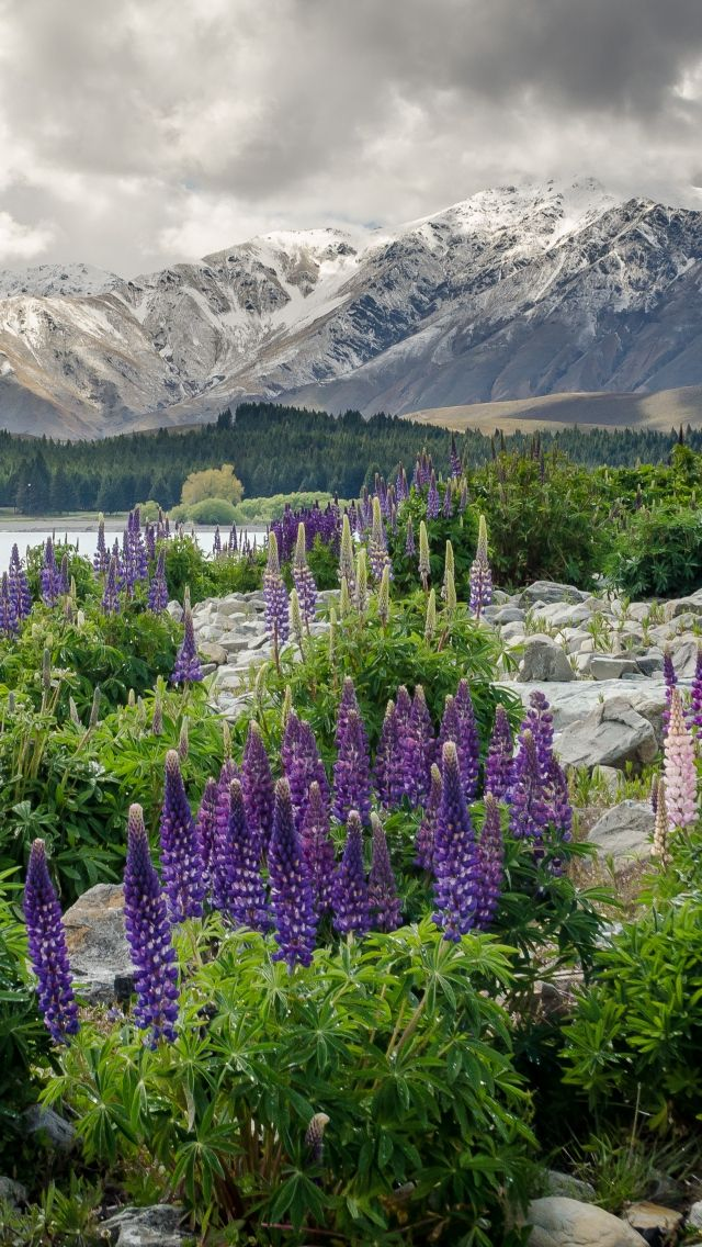 Download Wallpaper 640x1136 New zealand, Mountains, Flowers, Lake iPhone 5S, 5C, 5 HD Background