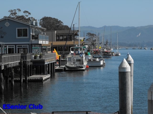 79 best images about morro bay calif on pinterest sea for Morro bay fishing