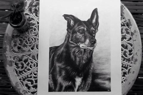 My drawing of stout the dog.  Amy Peters-Artist Facebook