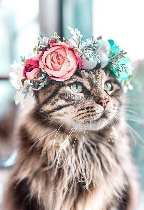 Schöne Katze   – Seasons: Sommer: Summer – #katze #schöne #Seasons #Sommer #Su…