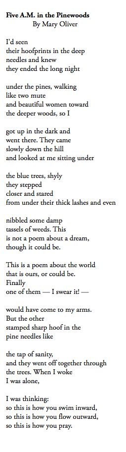 5 AM in the Pinewoods, Mary Oliver