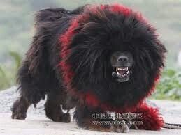 Tibetan Mastiff | www.pixshark.com - Images Galleries With ...
