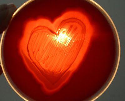 To My Lab Valentine