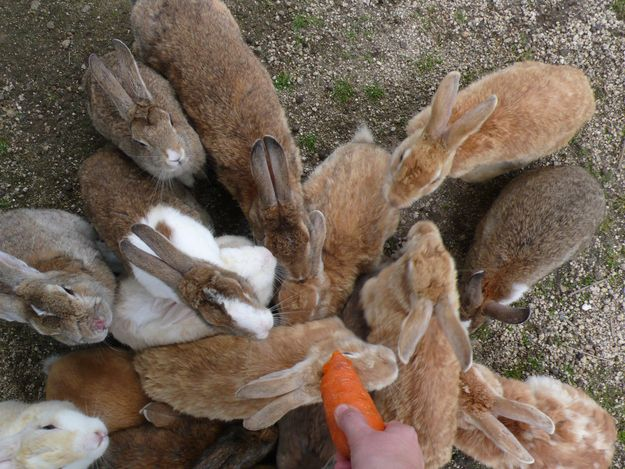 """Lets get lost 