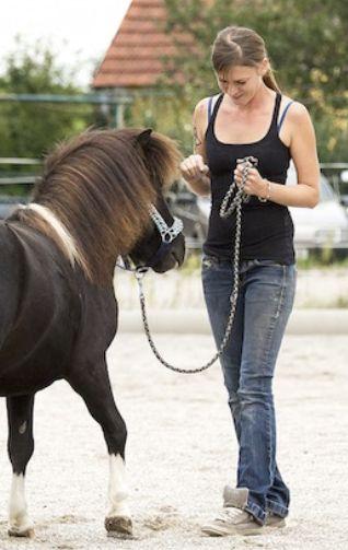 Clicker-Kurs Targettraining! So macht Clickern dir und deinem Pferd Spaß! <3