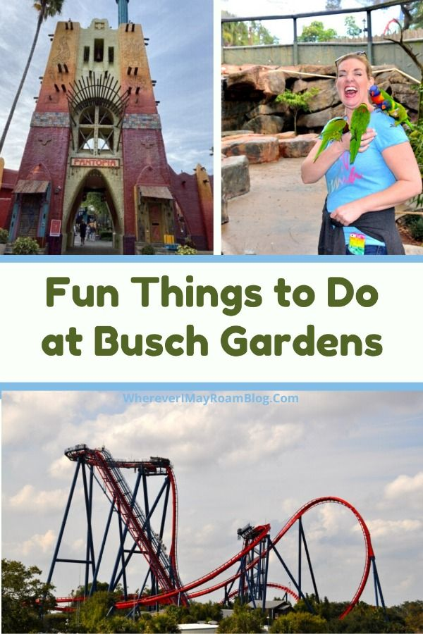 dd133afb1dc9abbe2e5226bf9100b997 - Is Busch Gardens Open On Monday