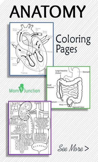 Top 10 Anatomy Coloring Pages For Your Toddler Anatomy Homeschool