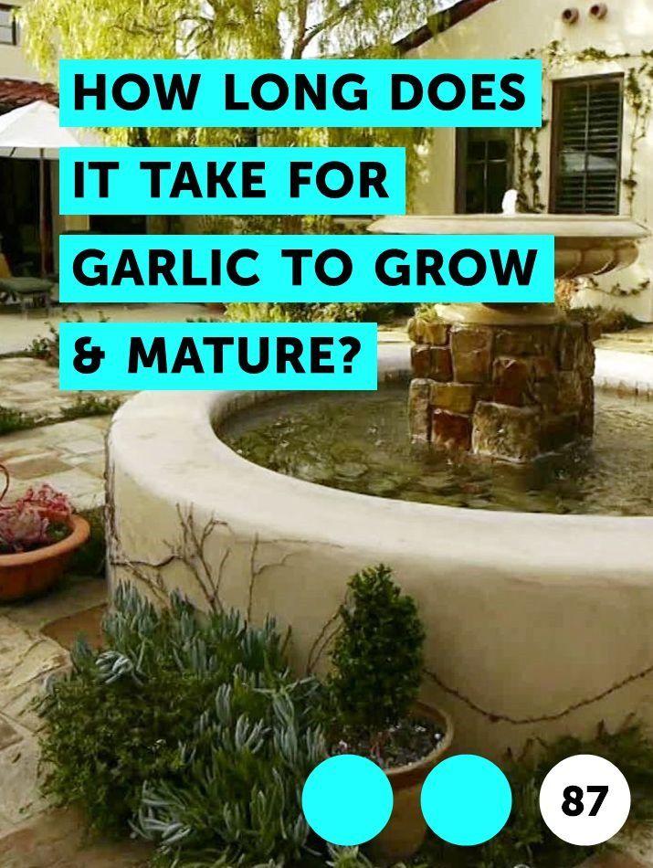 Pin On Growing Garlic