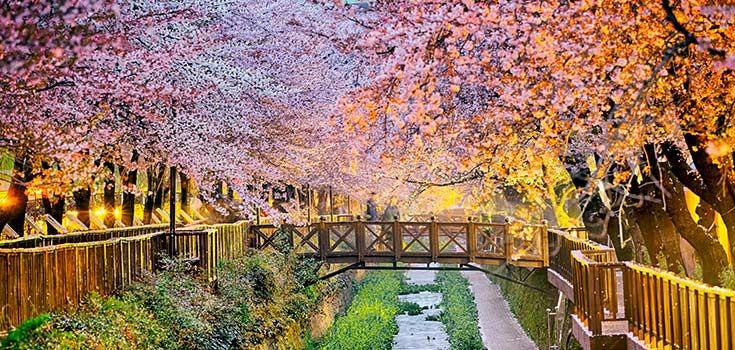 Best Time To Visit South Korea Busan South Korea Travel South South Korea