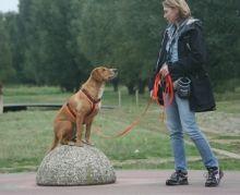 """Finde die Bordsteinkante Im Straßenverkehr ist es wichtig, dass dein Hund nicht einfach auf die Strasse läuft. Dafür kannst Du üben, dass dir dein Hund Bordsteinkanten durch Stehen bleiben und/ oder Sitzen """"anzeigt"""". Geh auf dem Bürgersteig Richtung Straß"""
