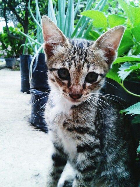 My epic model #cat #animal