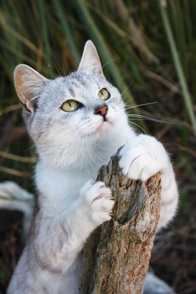 CyBeRGaTa - Cats, memes, Novo México