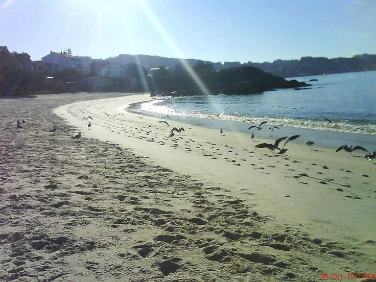 Playa y gaviotas en Bueu