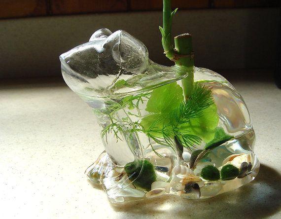 Lucky Frog Live Marimo Moss Ball Mini Aquarium Terrarium by MyZen, $28.95