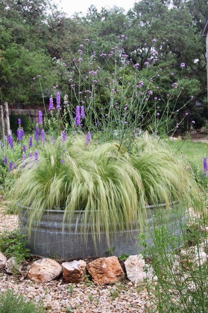 Verbena bonariensis, container gardening, landscape design, Rock-Oak-Deer: As seen on Pinterest: The Stock Tank Garden 2015