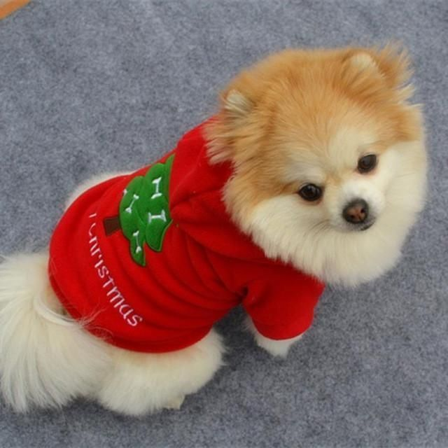 Best 25+ Small dog clothes ideas on Pinterest | Small dog ...
