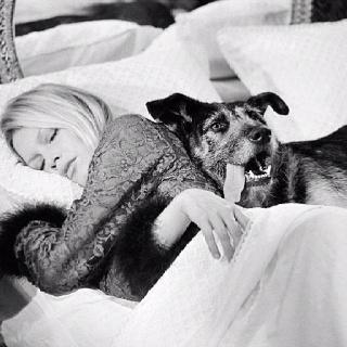 Brigitte BardotTerry O'Neil, White Photography, Dogs, Terry Oneill, People, Brigittebardot, Brigitte Bardot, Animal, Terry O' Neil