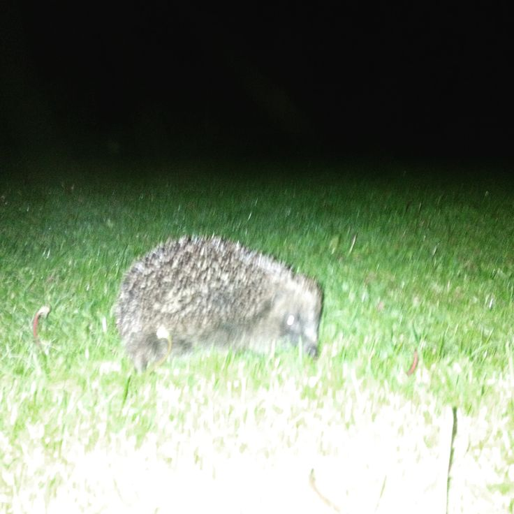 night-time visitor