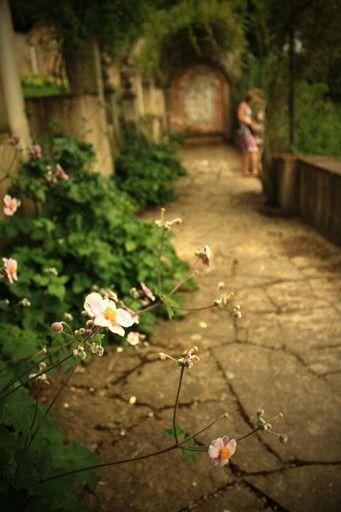 Flowers paradise in Boboli gardens