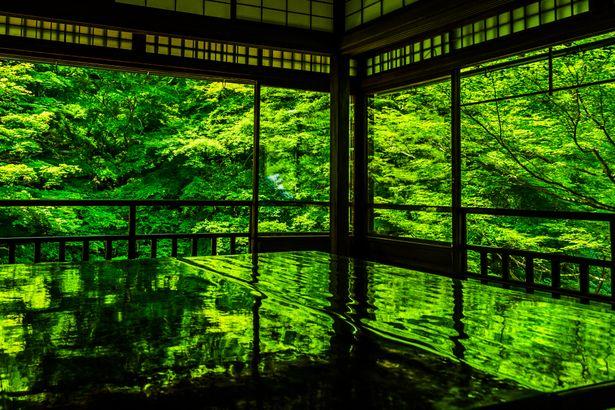 Kyoto, Japan 瑠璃光院 #緑 #Green | GANREF