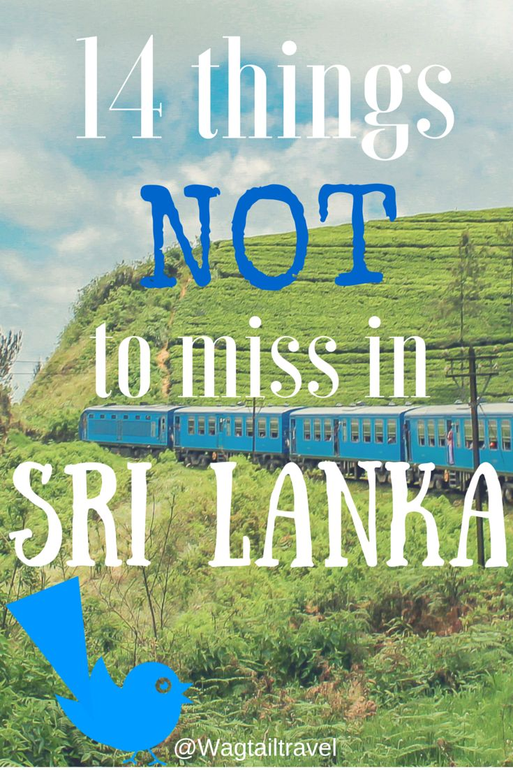 http://www.wagtailtravel.com/things-not-to-miss-in-sri-lanka/