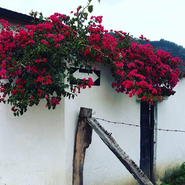 #charta #santander #colombia #photooftheday #nature #art #arte #love #travel #adventure #me #beautiful #colorful #tbt #flowers #flores 🏡