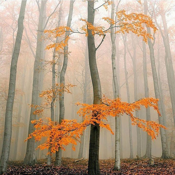 БиблиоДворик: Танго ноября. Осень кончается... поздняя осень, завернутая в обертку слов