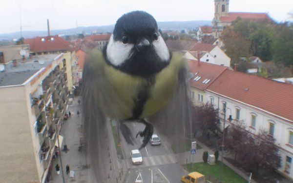 A bird just checkin' out the webcam.