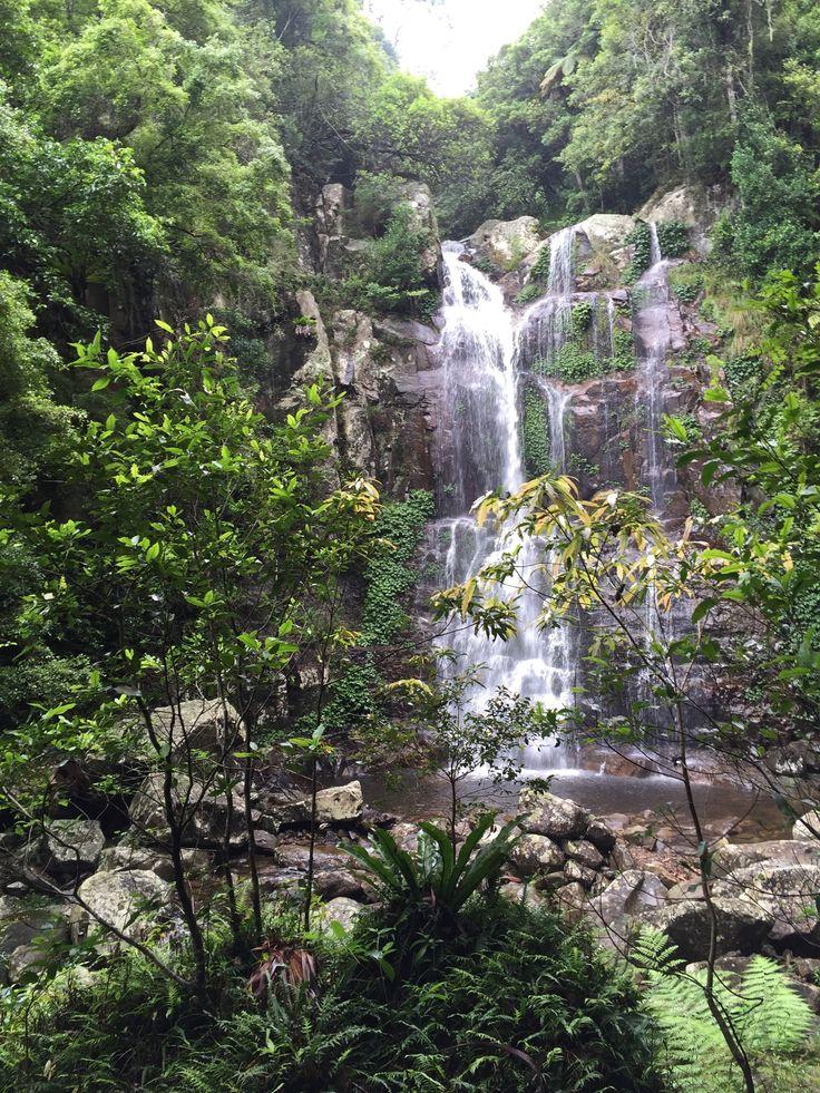 Minnamurra Rainforest in Jamberoo, NSW