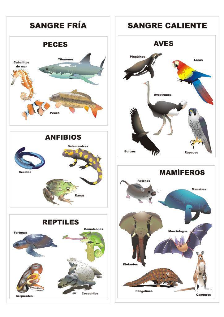 Clasificación De Los Animales Vertebrados Imagenes De Animales Vertebrados Animales Vertebrados Clasificación De Animales