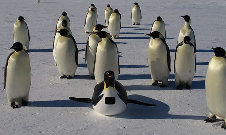 Penguins: Waddle All the Way : Discovery Channel