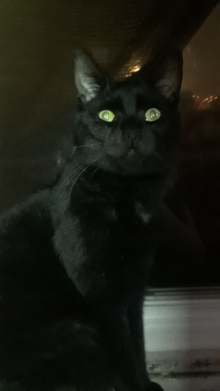 The Cat That Followed Me Home And Never Left Nightmare Before Christmas Nightmare For Short Hello There Bright People Are Yo Cats Cat Lovers Great Cat