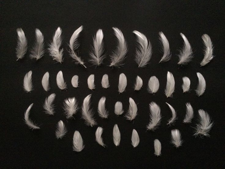 40 x Natural White Craft Feathers 3 - 8cm Mixed Assorted Bag Small Lot Art Bird