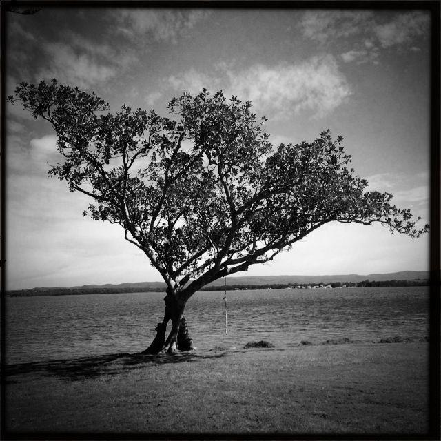 Shingle splitters Lake Macquarie nsw