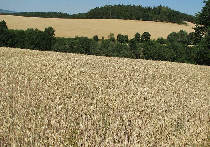 Harvest time in Mladá Vožice region (South Bohemia), Czechia