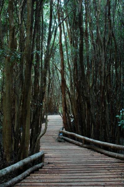 Bosques frondosos, caminos mágicos en Espejo de Luna. Chiloé. http://www.espejodeluna.cl