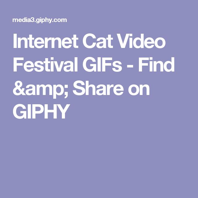 Internet Cat Video Festival GIFs - Find & Share on GIPHY