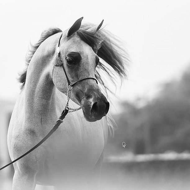 Pin By Afrah On Horses Horses Animals