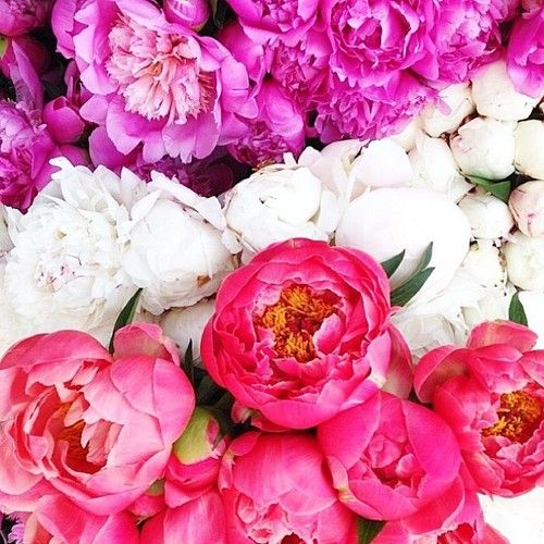 bright and beautiful blooms