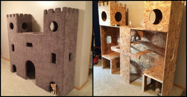 When you live with cats, you should have some cat trees and kitty furniture for them to jump, scratch, hide and play on.