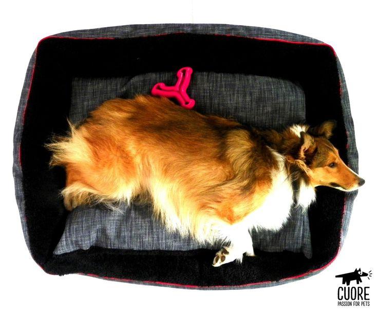 Al escoger la cama para tu perro, siempre debes tener en cuenta la forma en que duerme. La Denim Lounge rectangular es ideal para perros que adoptan una postura estirada #cuore #passionforpets #dogbeds #shetland #sheltie #petsagram #animals #petlovers #mascotas #petbeds #pets #instagramdogs #dogoftheday #photooftheday #dog #beautiful #love #shetlandsheepdog