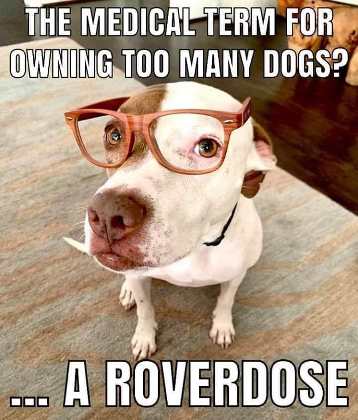What Is The Medical Term For Owning Too Many Dogs Dog Jokes Funny Dog Jokes Funny Dog Memes