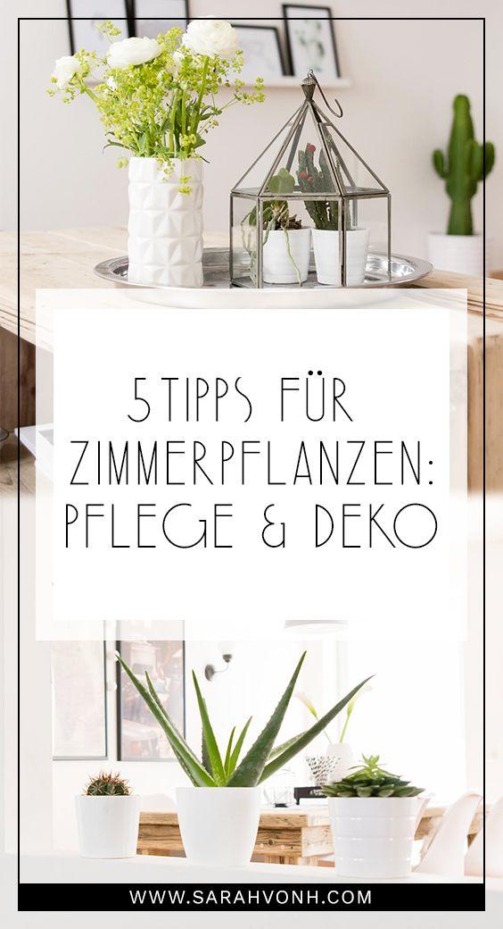 17 Best Ideas About Zimmerpflanzen Pflege On Pinterest | Orchideen ... Grune Zimmer Pflanzen Schoner Indoor Garten