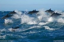 Raggy Charters - We take tourists, corporate and office party groups, TV crews and marine wildlife enthusiasts on ocean safaris to view the whales, dolphins and other natural wondersof the Eastern Cape bay of plenty. Day trip getaways available.