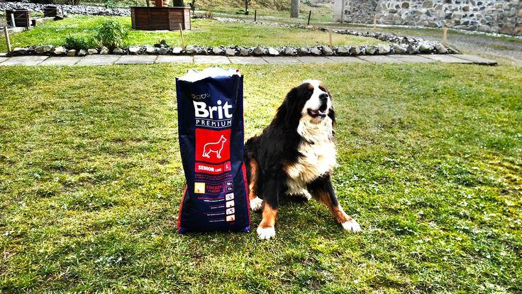 Brit premium senior L. Krmivo pro psy, kterým nic nezkazíte.